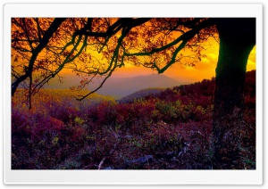 Autumn Dusk HD Wide Wallpaper for Widescreen