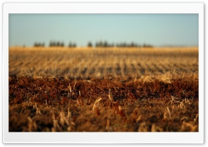 Autumn Field HD Wide Wallpaper for Widescreen