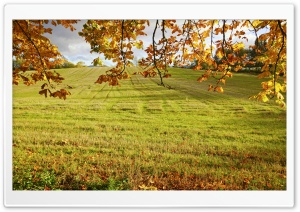 Autumn Field Branches HD Wide Wallpaper for Widescreen