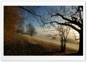 Autumn Foggy Morning HD Wide Wallpaper for Widescreen