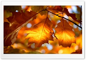 Autumn Foliage HD Wide Wallpaper for Widescreen