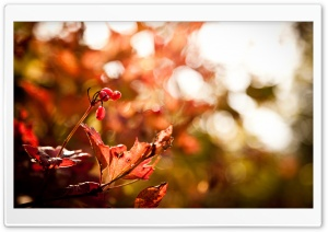 Autumn Foliage Bokeh HD Wide Wallpaper for Widescreen