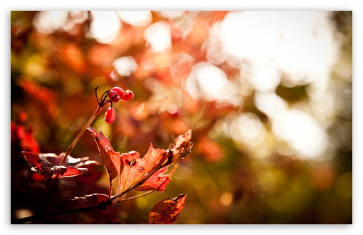 Autumn Foliage Bokeh ❤ 4K UHD Wallpaper for Wide 16:10 5:3 Widescreen WHXGA WQXGA WUXGA WXGA WGA ; 4K UHD 16:9 Ultra High Definition 2160p 1440p 1080p 900p 720p ; Standard 4:3 5:4 3:2 Fullscreen UXGA XGA SVGA QSXGA SXGA DVGA HVGA HQVGA ( Apple PowerBook G4 iPhone 4 3G 3GS iPod Touch ) ; Tablet 1:1 ; iPad 1/2/Mini ; Mobile 4:3 5:3 3:2 16:9 5:4 - UXGA XGA SVGA WGA DVGA HVGA HQVGA ( Apple PowerBook G4 iPhone 4 3G 3GS iPod Touch ) 2160p 1440p 1080p 900p 720p QSXGA SXGA ; Dual 4:3 5:4 UXGA XGA SVGA QSXGA SXGA ;