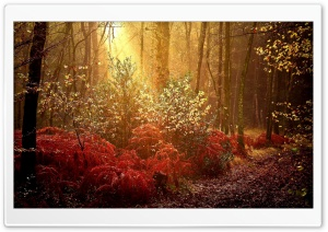 Autumn Forest HD Wide Wallpaper for Widescreen