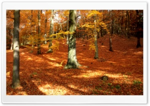 Autumn, Forest HD Wide Wallpaper for 4K UHD Widescreen desktop & smartphone