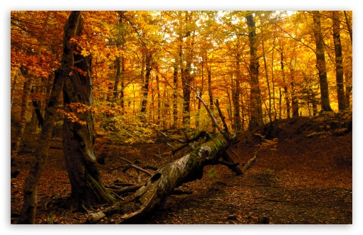 Autumn Forest HD wallpaper for Wide 16:10 5:3 Widescreen WHXGA WQXGA WUXGA WXGA WGA ; HD 16:9 High Definition WQHD QWXGA 1080p 900p 720p QHD nHD ; Standard 4:3 5:4 3:2 Fullscreen UXGA XGA SVGA QSXGA SXGA DVGA HVGA HQVGA devices ( Apple PowerBook G4 iPhone 4 3G 3GS iPod Touch ) ; Tablet 1:1 ; iPad 1/2/Mini ; Mobile 4:3 5:3 3:2 16:9 5:4 - UXGA XGA SVGA WGA DVGA HVGA HQVGA devices ( Apple PowerBook G4 iPhone 4 3G 3GS iPod Touch ) WQHD QWXGA 1080p 900p 720p QHD nHD QSXGA SXGA ;