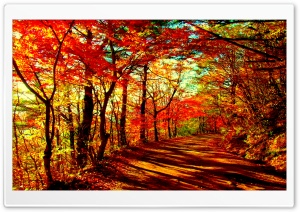 Autumn Forest HD Wide Wallpaper for 4K UHD Widescreen desktop & smartphone