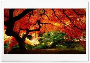 Autumn forest Ultra HD Wallpaper for 4K UHD Widescreen desktop, tablet & smartphone