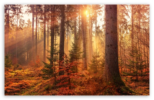 Download Autumn Forest Path HD Wallpaper