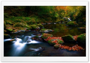 Autumn Forest River HD Wide Wallpaper for 4K UHD Widescreen desktop & smartphone