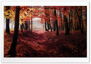 Autumn, Forest Trees, Red Leaves HD Wide Wallpaper for Widescreen