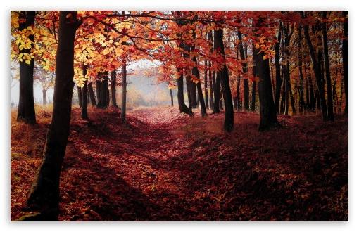 Autumn, Forest Trees, Red Leaves ❤ 4K UHD Wallpaper for Wide 16:10 5:3 Widescreen WHXGA WQXGA WUXGA WXGA WGA ; UltraWide 21:9 24:10 ; 4K UHD 16:9 Ultra High Definition 2160p 1440p 1080p 900p 720p ; UHD 16:9 2160p 1440p 1080p 900p 720p ; Standard 4:3 5:4 3:2 Fullscreen UXGA XGA SVGA QSXGA SXGA DVGA HVGA HQVGA ( Apple PowerBook G4 iPhone 4 3G 3GS iPod Touch ) ; Smartphone 16:9 3:2 5:3 2160p 1440p 1080p 900p 720p DVGA HVGA HQVGA ( Apple PowerBook G4 iPhone 4 3G 3GS iPod Touch ) WGA ; Tablet 1:1 ; iPad 1/2/Mini ; Mobile 4:3 5:3 3:2 16:9 5:4 - UXGA XGA SVGA WGA DVGA HVGA HQVGA ( Apple PowerBook G4 iPhone 4 3G 3GS iPod Touch ) 2160p 1440p 1080p 900p 720p QSXGA SXGA ;