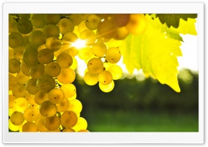 Autumn Grape HD Wide Wallpaper for Widescreen