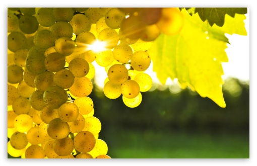 Autumn Grape HD wallpaper for Wide 16:10 5:3 Widescreen WHXGA WQXGA WUXGA WXGA WGA ; HD 16:9 High Definition WQHD QWXGA 1080p 900p 720p QHD nHD ; UHD 16:9 WQHD QWXGA 1080p 900p 720p QHD nHD ; Standard 4:3 5:4 3:2 Fullscreen UXGA XGA SVGA QSXGA SXGA DVGA HVGA HQVGA devices ( Apple PowerBook G4 iPhone 4 3G 3GS iPod Touch ) ; Tablet 1:1 ; iPad 1/2/Mini ; Mobile 4:3 5:3 3:2 16:9 5:4 - UXGA XGA SVGA WGA DVGA HVGA HQVGA devices ( Apple PowerBook G4 iPhone 4 3G 3GS iPod Touch ) WQHD QWXGA 1080p 900p 720p QHD nHD QSXGA SXGA ; Dual 5:4 QSXGA SXGA ;