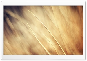 Autumn Grass Background HD Wide Wallpaper for Widescreen