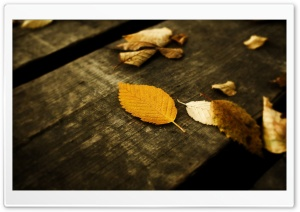 Autumn Has Arrived 7 HD Wide Wallpaper for Widescreen