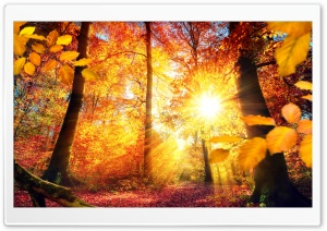 Autumn in Germany HD Wide Wallpaper for Widescreen