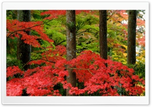 Autumn in Japan HD Wide Wallpaper for Widescreen