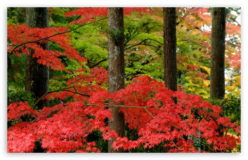 Autumn in Japan HD wallpaper for Wide 16:10 5:3 Widescreen WHXGA WQXGA WUXGA WXGA WGA ; HD 16:9 High Definition WQHD QWXGA 1080p 900p 720p QHD nHD ; Standard 4:3 5:4 3:2 Fullscreen UXGA XGA SVGA QSXGA SXGA DVGA HVGA HQVGA devices ( Apple PowerBook G4 iPhone 4 3G 3GS iPod Touch ) ; Tablet 1:1 ; iPad 1/2/Mini ; Mobile 4:3 5:3 3:2 16:9 5:4 - UXGA XGA SVGA WGA DVGA HVGA HQVGA devices ( Apple PowerBook G4 iPhone 4 3G 3GS iPod Touch ) WQHD QWXGA 1080p 900p 720p QHD nHD QSXGA SXGA ;