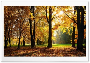 Autumn In The Forest HD Wide Wallpaper for Widescreen
