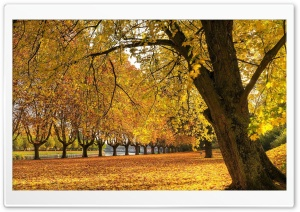 Autumn In The Park HD Wide Wallpaper for 4K UHD Widescreen desktop & smartphone
