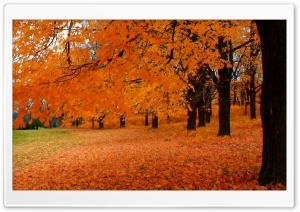 Autumn In Wisconsin HD Wide Wallpaper for Widescreen