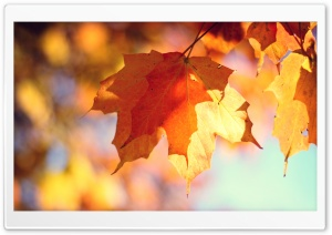 Autumn Is Here HD Wide Wallpaper for Widescreen
