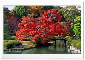 Autumn, Japan HD Wide Wallpaper for 4K UHD Widescreen desktop & smartphone