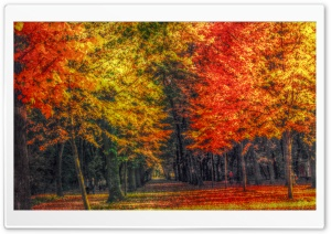 Autumn Landscape HDR HD Wide Wallpaper for Widescreen