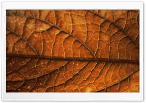 Autumn Leaf Background HD Wide Wallpaper for Widescreen