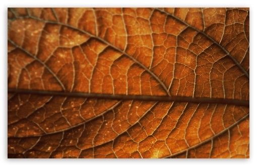 Autumn Leaf Background HD wallpaper for Wide 16:10 5:3 Widescreen WHXGA WQXGA WUXGA WXGA WGA ; HD 16:9 High Definition WQHD QWXGA 1080p 900p 720p QHD nHD ; Standard 4:3 5:4 3:2 Fullscreen UXGA XGA SVGA QSXGA SXGA DVGA HVGA HQVGA devices ( Apple PowerBook G4 iPhone 4 3G 3GS iPod Touch ) ; Tablet 1:1 ; iPad 1/2/Mini ; Mobile 4:3 5:3 3:2 16:9 5:4 - UXGA XGA SVGA WGA DVGA HVGA HQVGA devices ( Apple PowerBook G4 iPhone 4 3G 3GS iPod Touch ) WQHD QWXGA 1080p 900p 720p QHD nHD QSXGA SXGA ;