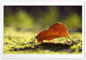 Autumn Leaf Bokeh HD Wide Wallpaper for Widescreen