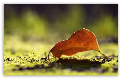 Autumn Leaf Bokeh HD wallpaper for Wide 16:10 5:3 Widescreen WHXGA WQXGA WUXGA WXGA WGA ; HD 16:9 High Definition WQHD QWXGA 1080p 900p 720p QHD nHD ; Standard 4:3 5:4 3:2 Fullscreen UXGA XGA SVGA QSXGA SXGA DVGA HVGA HQVGA devices ( Apple PowerBook G4 iPhone 4 3G 3GS iPod Touch ) ; Tablet 1:1 ; iPad 1/2/Mini ; Mobile 4:3 5:3 3:2 16:9 5:4 - UXGA XGA SVGA WGA DVGA HVGA HQVGA devices ( Apple PowerBook G4 iPhone 4 3G 3GS iPod Touch ) WQHD QWXGA 1080p 900p 720p QHD nHD QSXGA SXGA ; Dual 16:10 4:3 5:4 WHXGA WQXGA WUXGA WXGA UXGA XGA SVGA QSXGA SXGA ;
