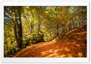 Autumn Leaf Color, Forest Ultra HD Wallpaper for 4K UHD Widescreen desktop, tablet & smartphone