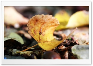 Autumn Leaf Macro HD Wide Wallpaper for Widescreen