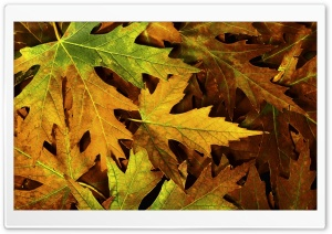 Autumn Leafage HD Wide Wallpaper for Widescreen