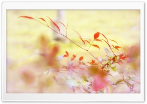 Autumn Leaves HD Wide Wallpaper for Widescreen