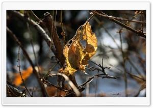 Autumn Leaves Ultra HD Wallpaper for 4K UHD Widescreen desktop, tablet & smartphone