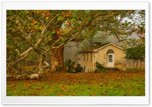 Autumn, Leaves, Big Tree, Old House Ultra HD Wallpaper for 4K UHD Widescreen desktop, tablet & smartphone