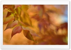 Autumn Leaves, Bokeh HD Wide Wallpaper for Widescreen