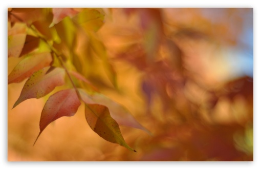 Autumn Leaves, Bokeh HD wallpaper for Wide 16:10 5:3 Widescreen WHXGA WQXGA WUXGA WXGA WGA ; HD 16:9 High Definition WQHD QWXGA 1080p 900p 720p QHD nHD ; Standard 4:3 5:4 3:2 Fullscreen UXGA XGA SVGA QSXGA SXGA DVGA HVGA HQVGA devices ( Apple PowerBook G4 iPhone 4 3G 3GS iPod Touch ) ; Tablet 1:1 ; iPad 1/2/Mini ; Mobile 4:3 5:3 3:2 16:9 5:4 - UXGA XGA SVGA WGA DVGA HVGA HQVGA devices ( Apple PowerBook G4 iPhone 4 3G 3GS iPod Touch ) WQHD QWXGA 1080p 900p 720p QHD nHD QSXGA SXGA ; Dual 4:3 5:4 UXGA XGA SVGA QSXGA SXGA ;