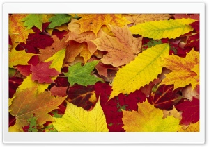 Autumn Leaves Changing Color HD Wide Wallpaper for Widescreen