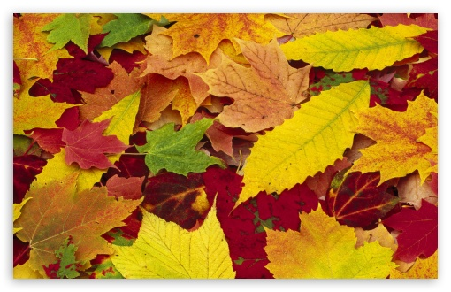 Autumn Leaves Changing Color UltraHD Wallpaper for Wide 16:10 5:3 Widescreen WHXGA WQXGA WUXGA WXGA WGA ; 8K UHD TV 16:9 Ultra High Definition 2160p 1440p 1080p 900p 720p ; Standard 4:3 5:4 3:2 Fullscreen UXGA XGA SVGA QSXGA SXGA DVGA HVGA HQVGA ( Apple PowerBook G4 iPhone 4 3G 3GS iPod Touch ) ; Tablet 1:1 ; iPad 1/2/Mini ; Mobile 4:3 5:3 3:2 16:9 5:4 - UXGA XGA SVGA WGA DVGA HVGA HQVGA ( Apple PowerBook G4 iPhone 4 3G 3GS iPod Touch ) 2160p 1440p 1080p 900p 720p QSXGA SXGA ;