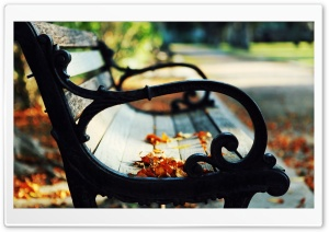 Autumn Leaves On A Bench HD Wide Wallpaper for Widescreen