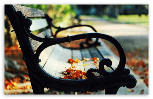 Autumn Leaves On A Bench HD wallpaper for Wide 16:10 5:3 Widescreen WHXGA WQXGA WUXGA WXGA WGA ; HD 16:9 High Definition WQHD QWXGA 1080p 900p 720p QHD nHD ; Standard 4:3 5:4 3:2 Fullscreen UXGA XGA SVGA QSXGA SXGA DVGA HVGA HQVGA devices ( Apple PowerBook G4 iPhone 4 3G 3GS iPod Touch ) ; iPad 1/2/Mini ; Mobile 4:3 5:3 3:2 16:9 5:4 - UXGA XGA SVGA WGA DVGA HVGA HQVGA devices ( Apple PowerBook G4 iPhone 4 3G 3GS iPod Touch ) WQHD QWXGA 1080p 900p 720p QHD nHD QSXGA SXGA ;