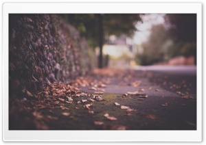 Autumn Leaves On Pavement HD Wide Wallpaper for Widescreen