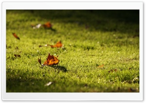 Autumn Leaves On The Lawn HD Wide Wallpaper for Widescreen