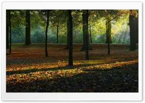 Autumn Light HD Wide Wallpaper for Widescreen