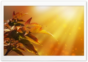 Autumn Magic HD Wide Wallpaper for Widescreen