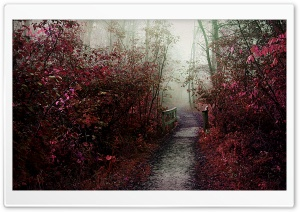 Autumn Mist Path HD Wide Wallpaper for Widescreen
